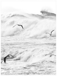 Rough Waves 1, Four Birds